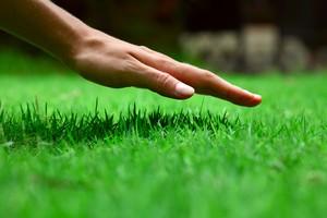 landscaping Woodbridge va