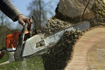 tree removal fairfax va