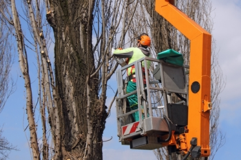tree services fairfax va
